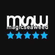 Magicseaweed Surf forecast